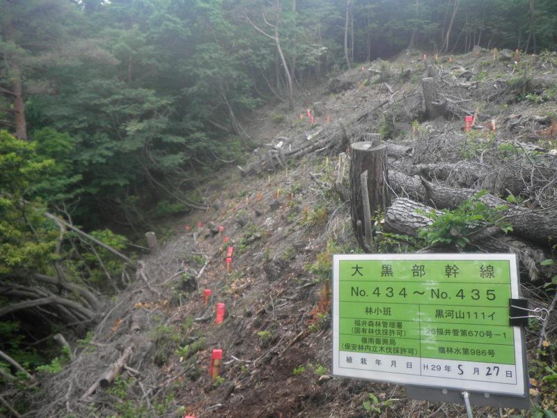 越前嶺南線No.147他保安林内近接樹木伐採に伴う植栽工事